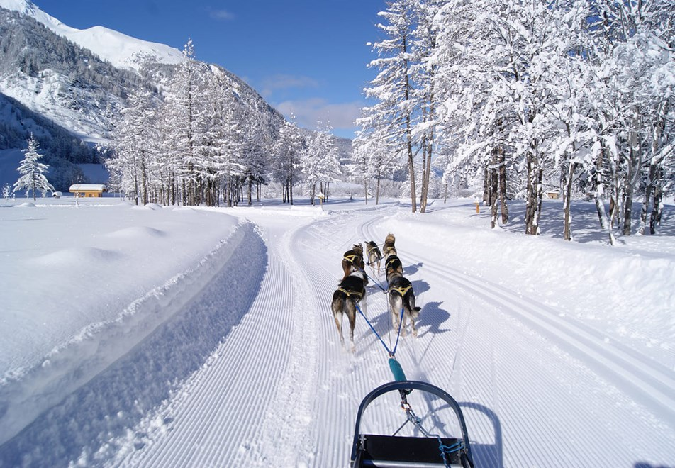 Peisey Vallandry Ski Resort - Dog sledding