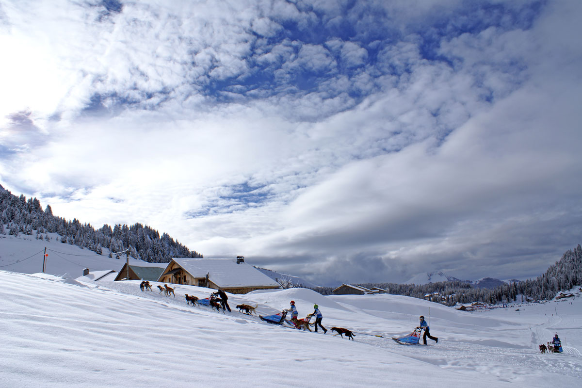 Praz de Lys - Dog Sledding