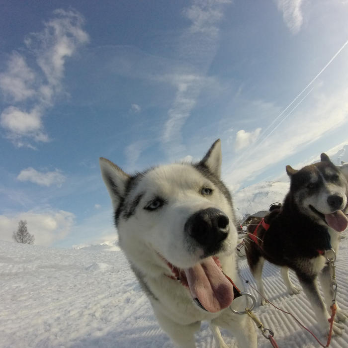 Dog Sledding in the French Alps